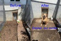 Dog Run Clean Up-2021